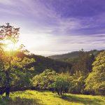 Sonoma County, détente et aventure en Californie